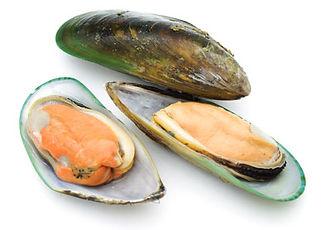 green_shell_mussel_web.jpg