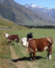 NZ_beef.jpg