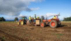 yam_farm.jpg