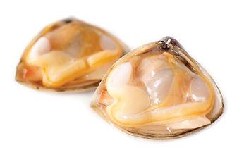 diamond_shell_clam_web.jpg
