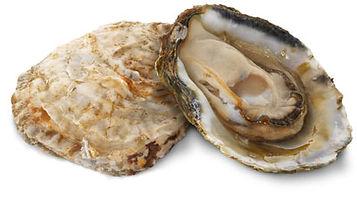 bluff_oyster_web.jpg