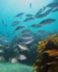 nz_fish.jpg