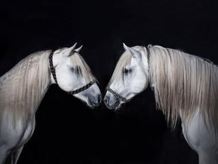 Vente de chevaux