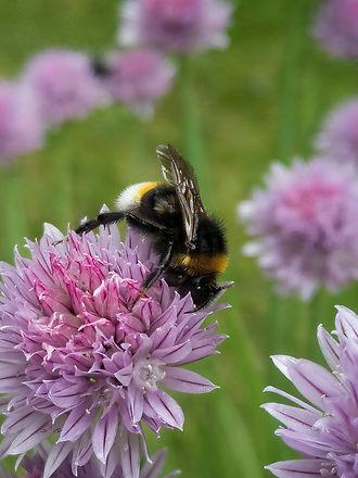 WT Bumblebee-SAI-stabilize.jpg