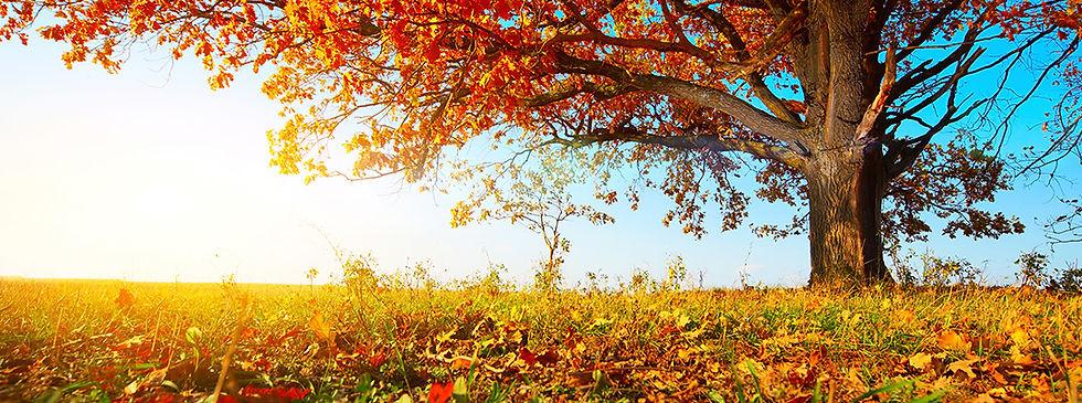 fall-1075x400_fall_scene5_b.jpg