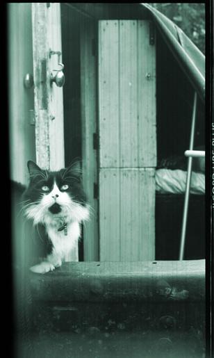 boat-cat_3852898294_o.jpg