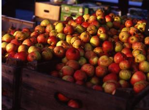 apples_4274126189_o.jpg
