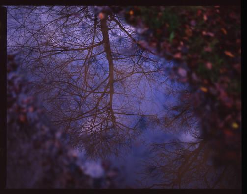 puddle_4274125955_o.jpg