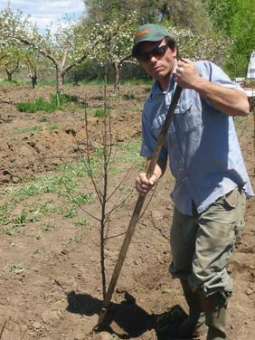 jeff planting new tree.jpg