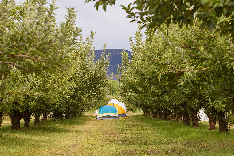 Camping in the orchard