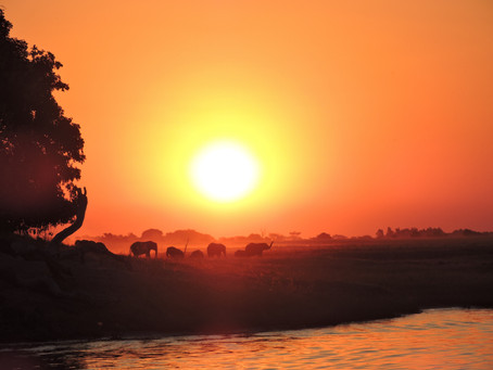 In the Land of Giants: Chobe Through my Eyes