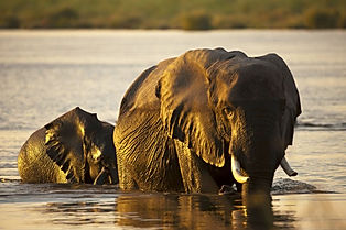 Africa's Big 5 await you like this elephant on your safari