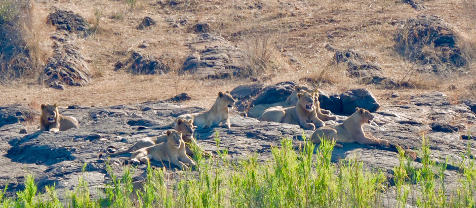 Our Regular Royalty Visitors: The Place of Lions