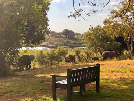 The Elephants Of Elephant Walk