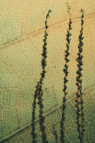 Plant Fine Art