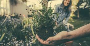 ¿Qué son los jardines terapéuticos?