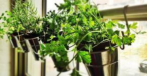 Haz tu propio jardín de hierbas aromáticas