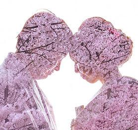 桜をキャンバスに撮影する新郎新婦