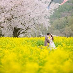菜の花と桜で前撮り