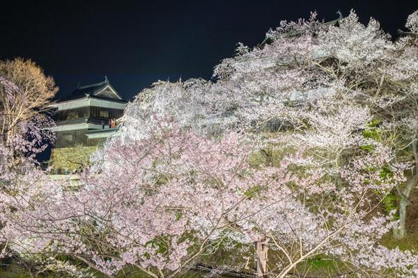 上田城と夜桜