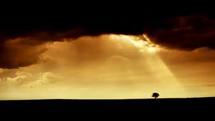"""MIEDO: """"La sombra del deseo, el opuesto de la confianza."""""""