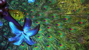 "Creatividad: ""El don individual para expresar la riqueza del universo"""