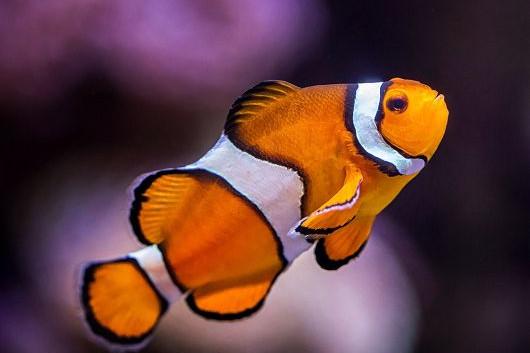 Star of F***ing Nemo