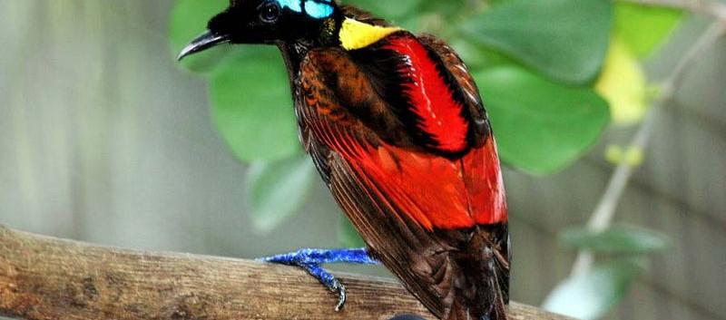 Another Bird of Paradise