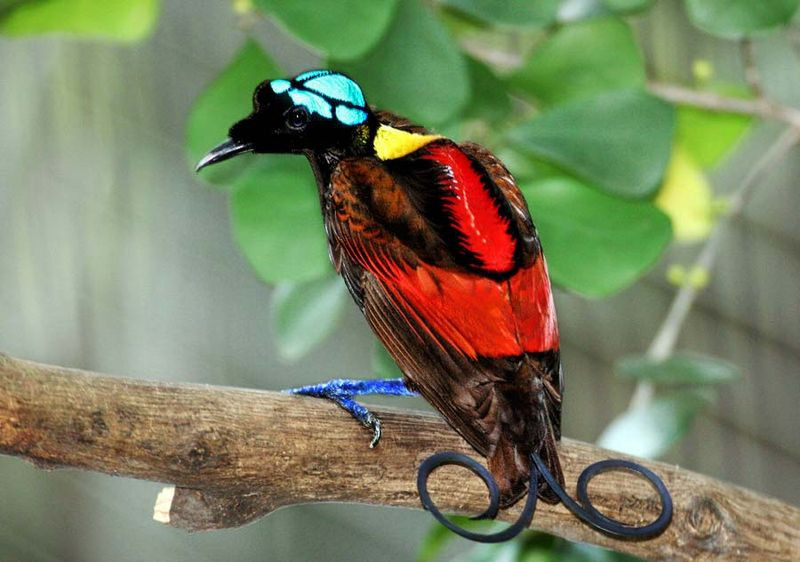 Another Bird of Paradise