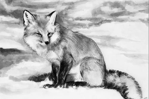 """SNOW FOX"" 4""x6"" PRINT"