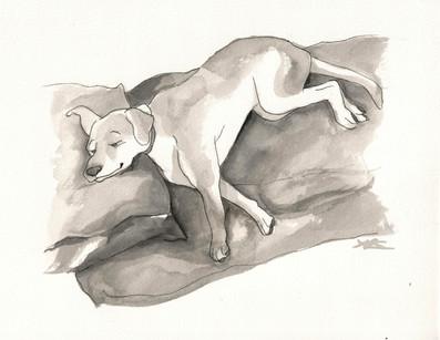 New Yorker Pet Portrait