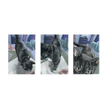 Sequential Cat Antics