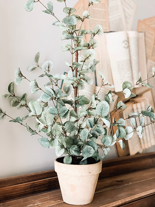 Garden Eucalyptus Tree