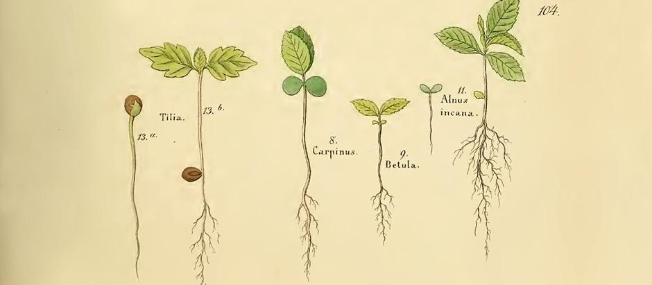 Take a Winter Break with Spring Botanicals