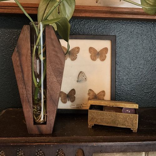 Walnut Coffin Propagation Station