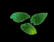 葉っぱ2.png