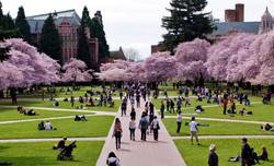 University-of-Washington-UW.jpg