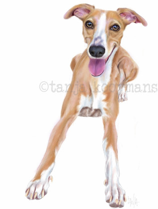 Whippet Penny