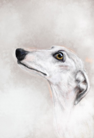 J'adore - white Greyhound
