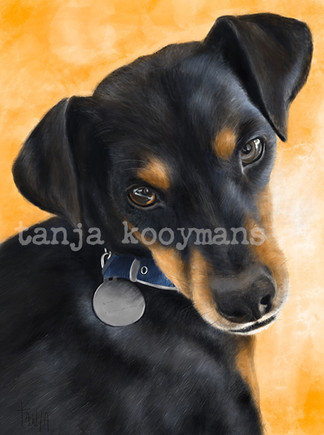 Peter - German Jagd Terrier mix