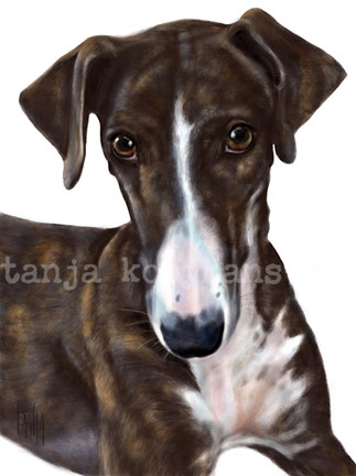 Estrella, Brindle Galgo - Greyhound