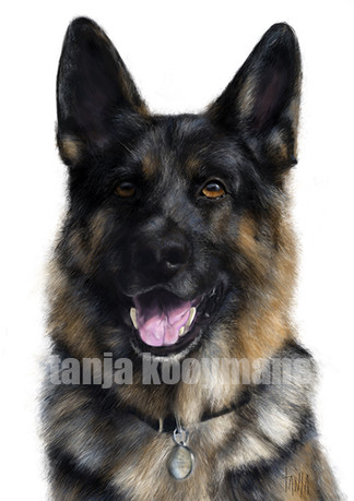 Imus German Shepherd