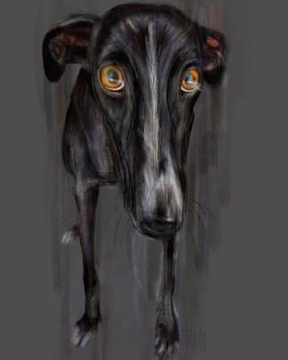 Why not? Black Greyhound