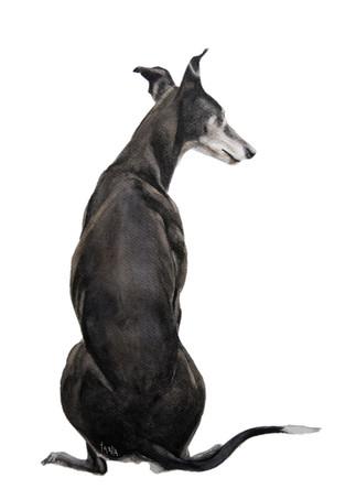 Gazing around - black Greyhound