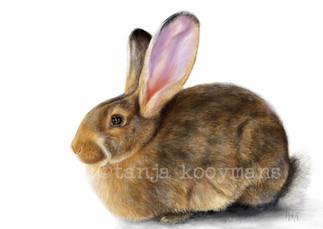 Konijn Hedy - Rabbit Hedy