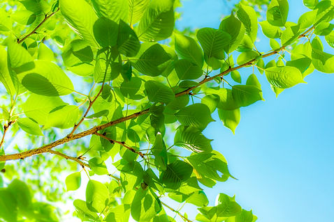 Fresh leaves and blue sky,  brightly col