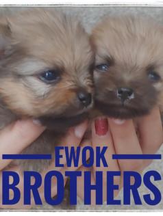Ewok Brothers