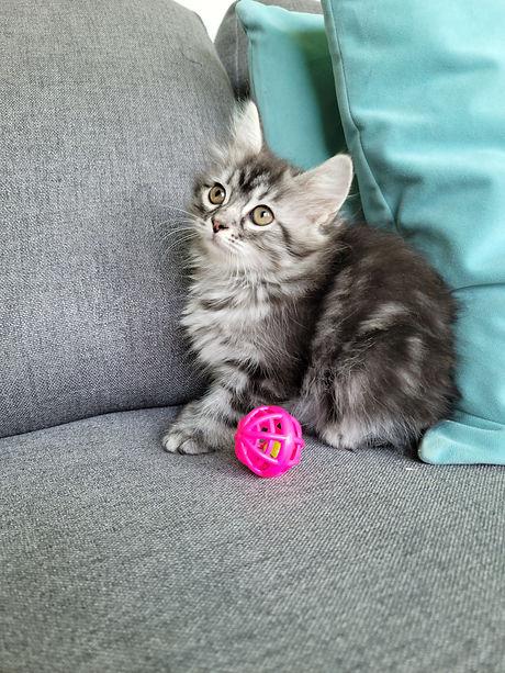 Sweet Kitty Girl