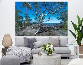 lounge room bush tree photo.jpg