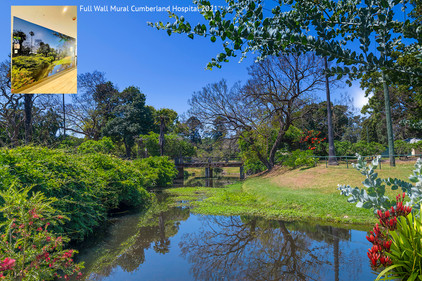Parramatta Park sun hero drop in flowers